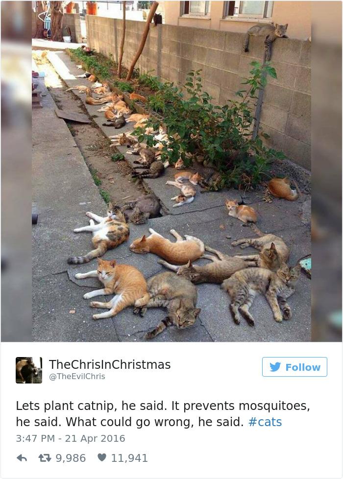 funniest-cat-tweets-2016-5