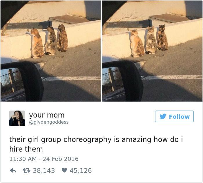 funniest-cat-tweets-2016-9