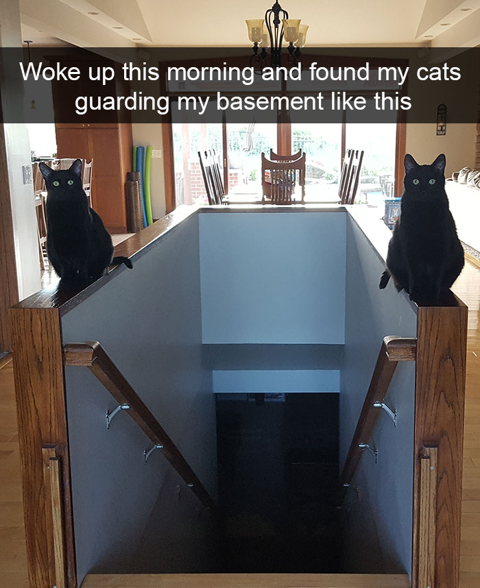 Hilarious Cat Snapchats That Will Light Up Your Day Purrshare - 25 of the funniest snapchats ever made