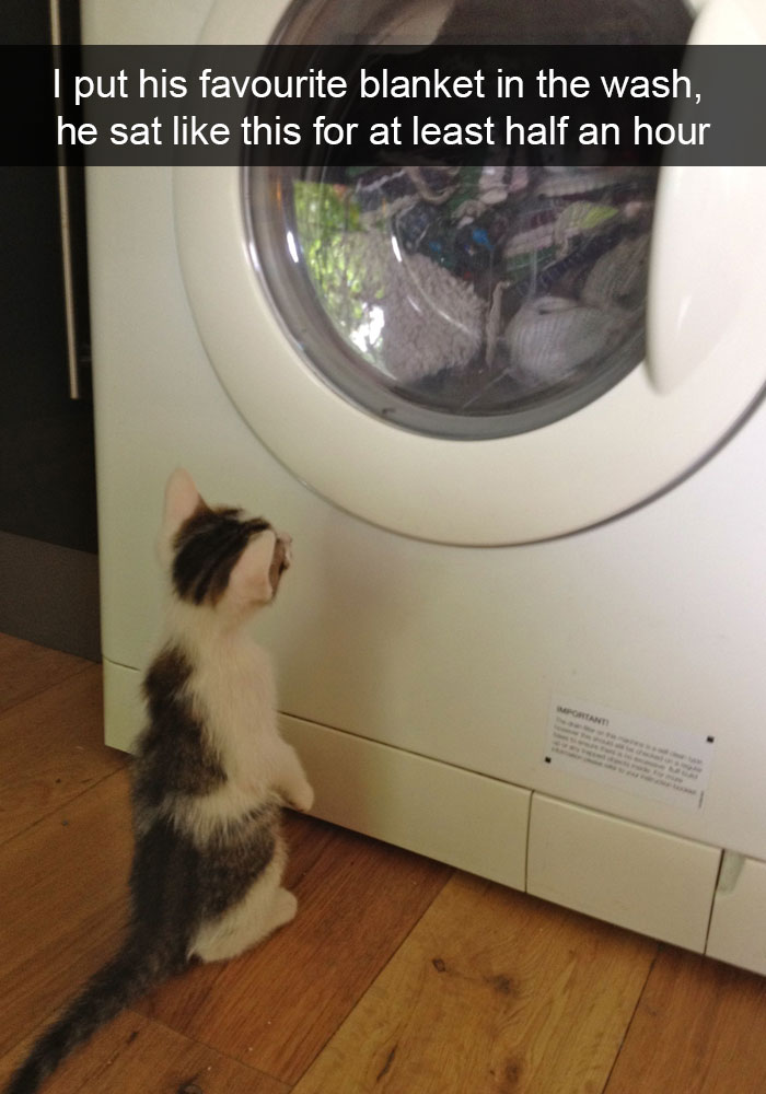 hilarious-cat-snapchats-11