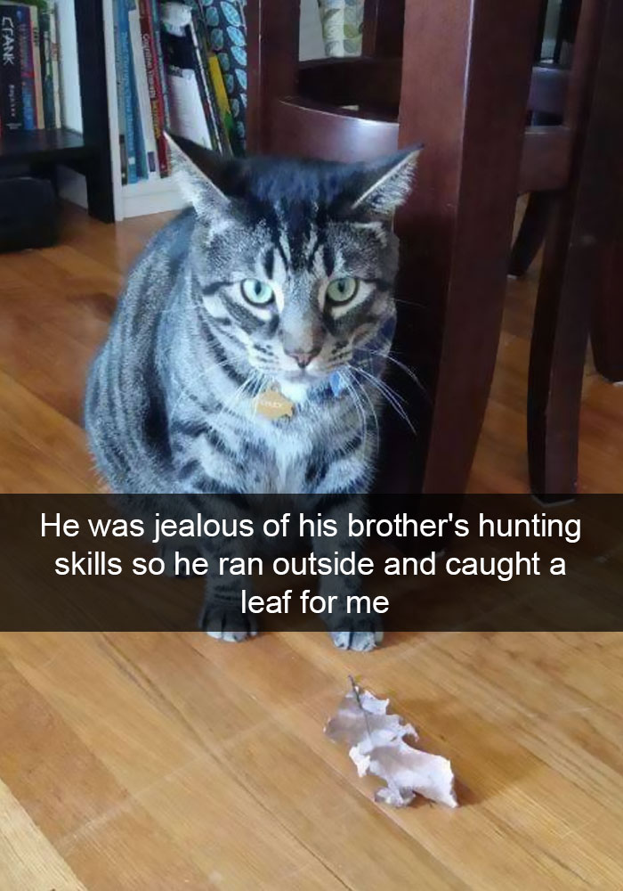 hilarious-cat-snapchats-12