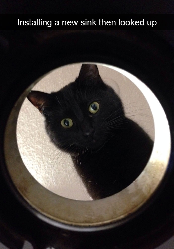 hilarious-cat-snapchats-13