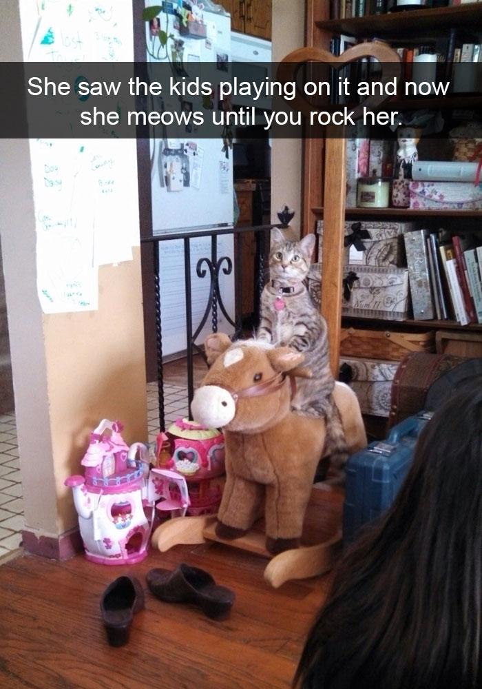 hilarious-cat-snapchats-15