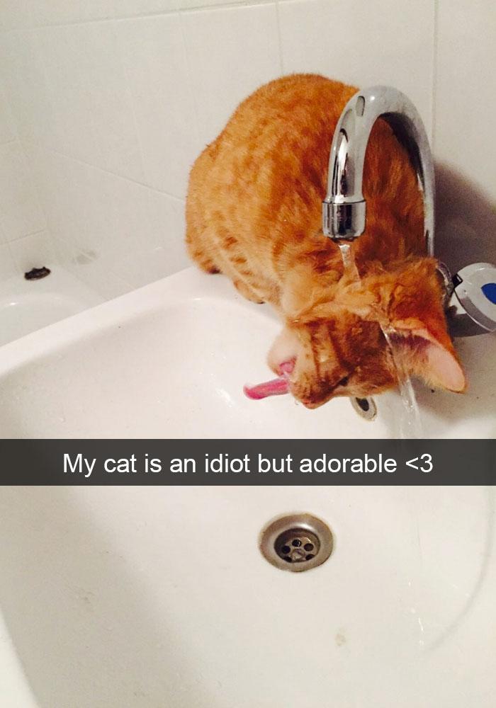 hilarious-cat-snapchats-17