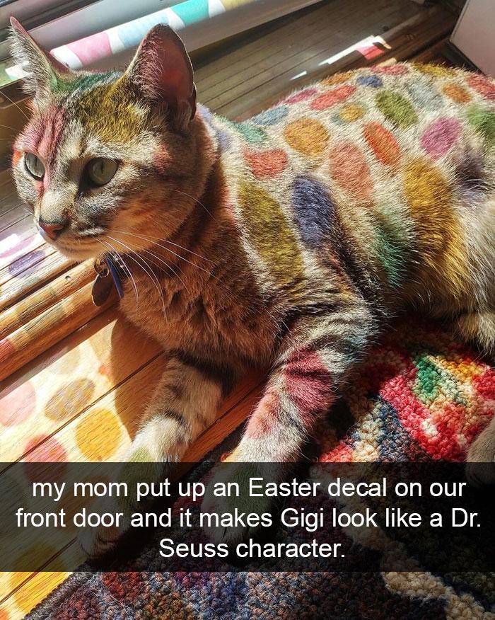 hilarious-cat-snapchats-18