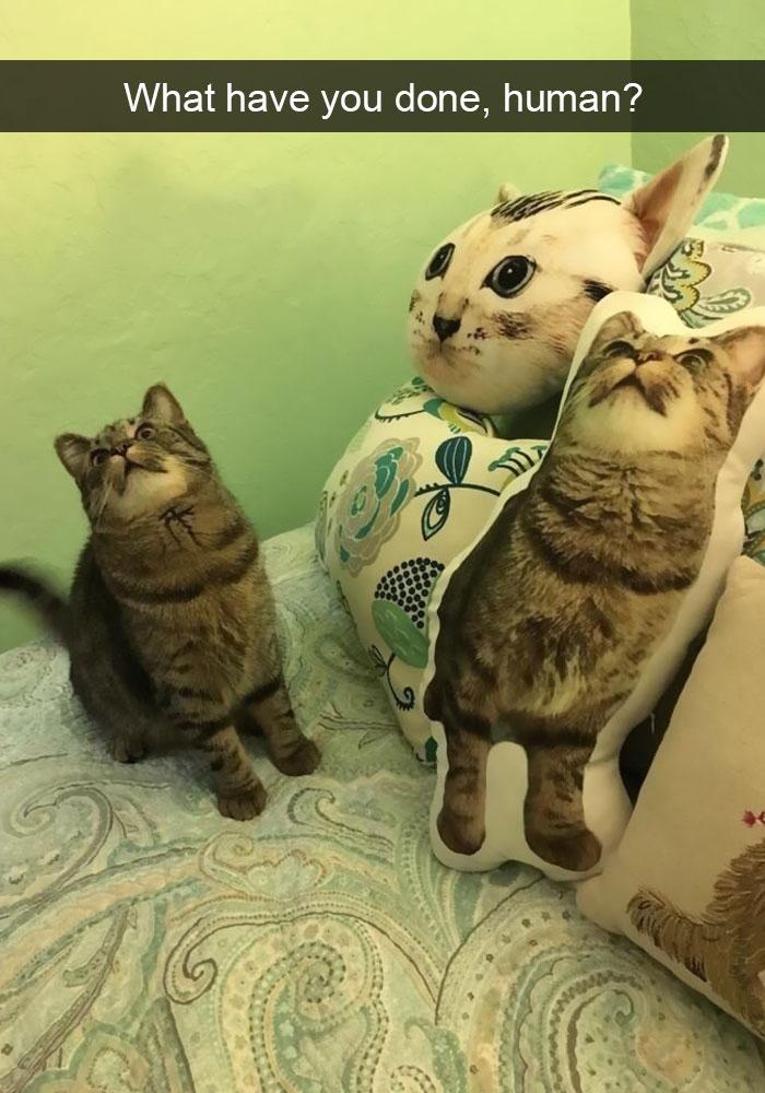 hilarious-cat-snapchats-20