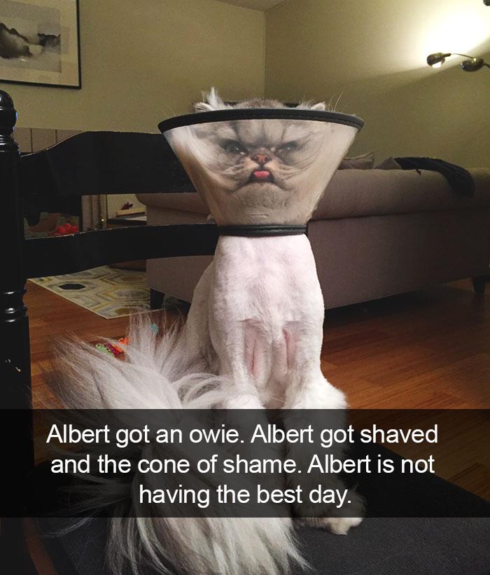 hilarious-cat-snapchats-24