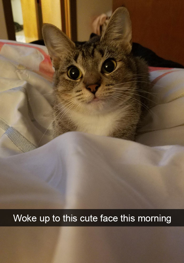 hilarious-cat-snapchats-37