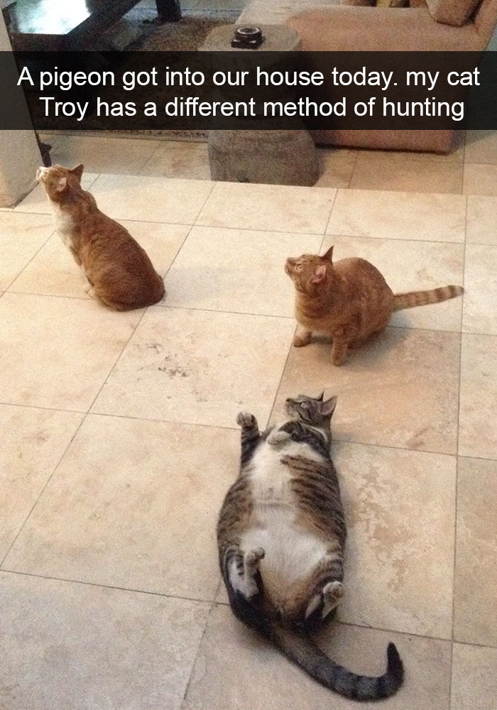 hilarious-cat-snapchats-38