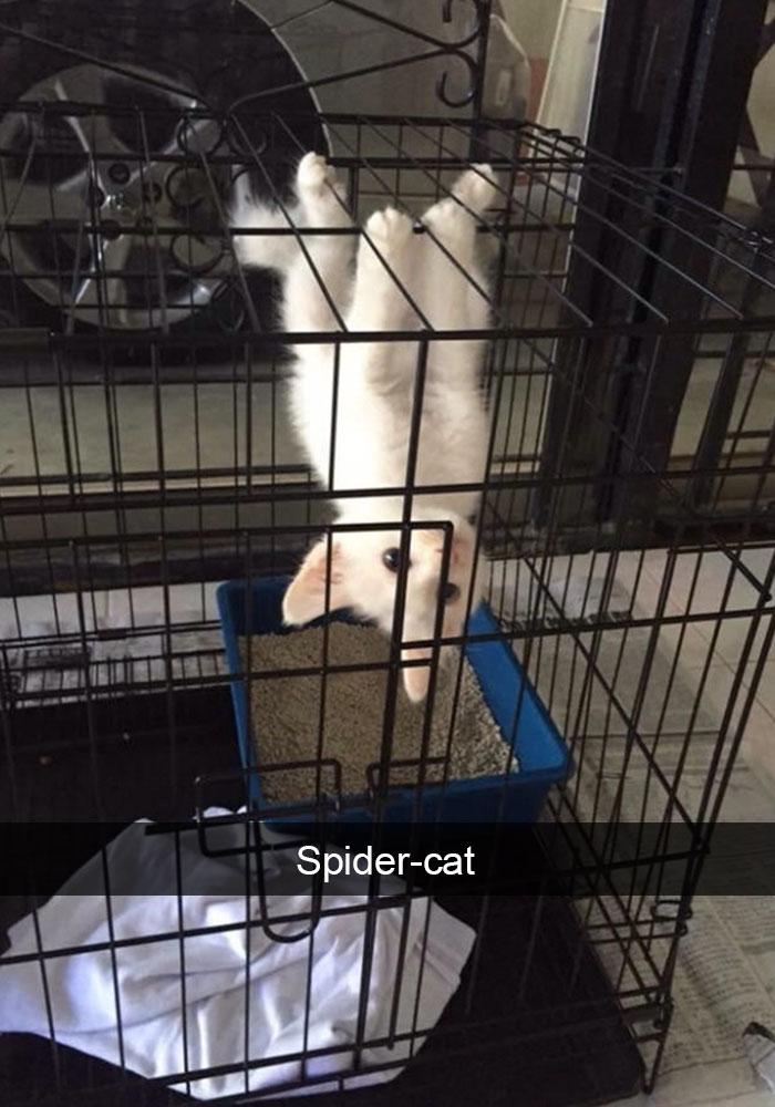 hilarious-cat-snapchats-4