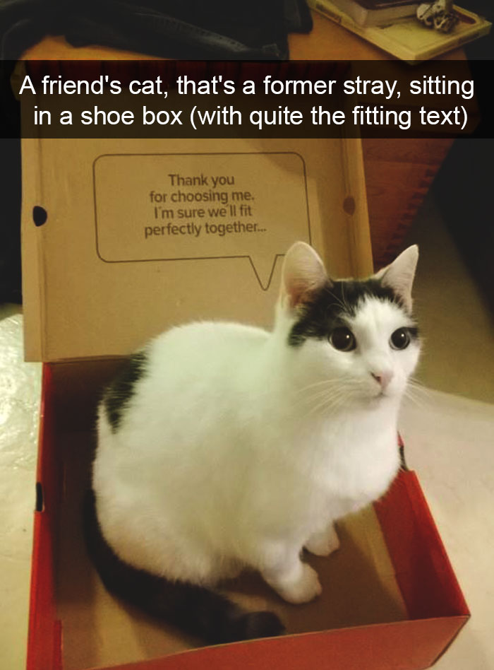 hilarious-cat-snapchats-5