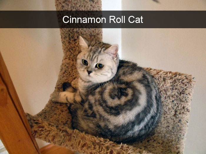 hilarious-cat-snapchats-6