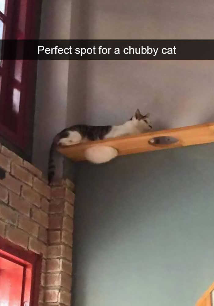 hilarious-cat-snapchats-8