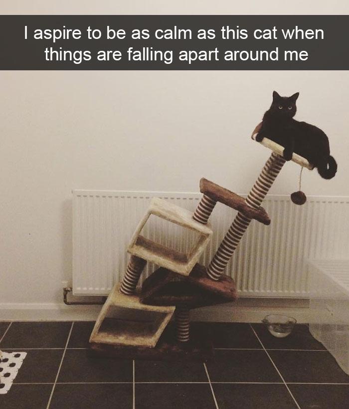 hilarious-cat-snapchats-9
