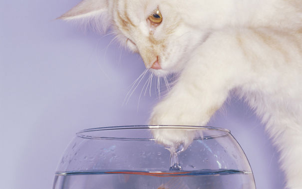 Cats-That-Love-Water-17