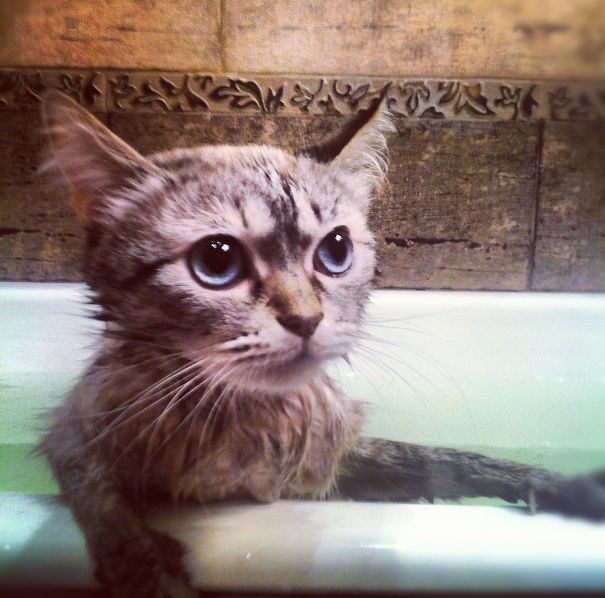 Cats-That-Love-Water-22