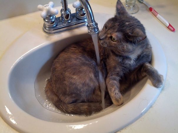 Cats-That-Love-Water-27