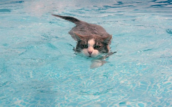 Cats-That-Love-Water-8