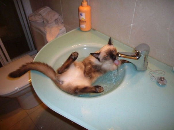 Cats-That-Love-Water-9