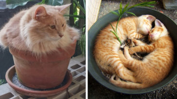Featured-Cat-Plants-Water