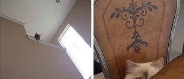 Featured-Cat-Secret-Agents-FB