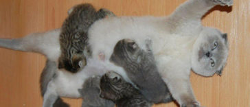 Featured-Proud-Cat-Mommies-FB