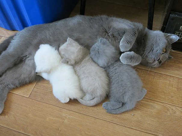 Proud-Cat-Mommies-1