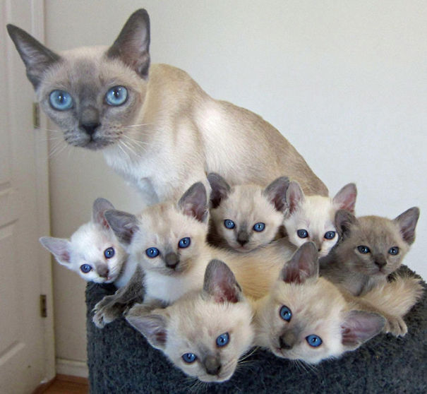 Proud-Cat-Mommies-10