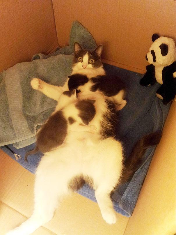Proud-Cat-Mommies-11