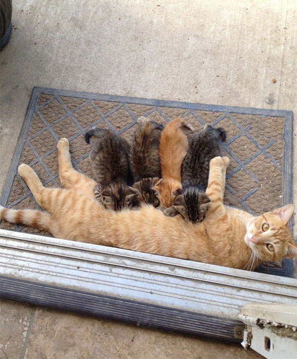 Proud-Cat-Mommies-12