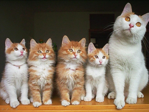Proud-Cat-Mommies-14