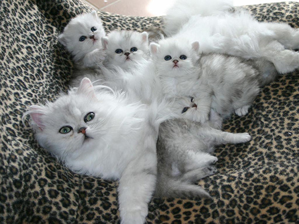 Proud-Cat-Mommies-15