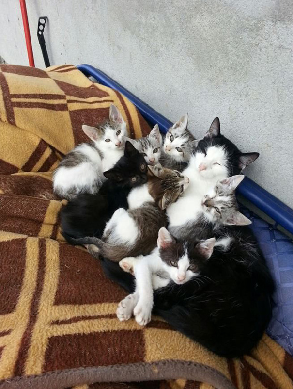 Proud-Cat-Mommies-16