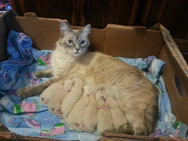 Proud-Cat-Mommies-17