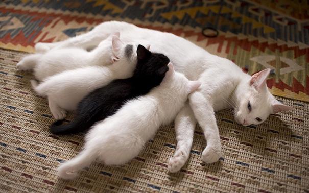 Proud-Cat-Mommies-18