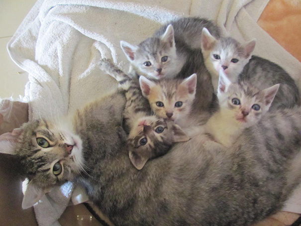 Proud-Cat-Mommies-19