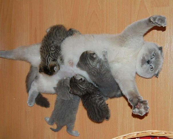 Proud-Cat-Mommies-2