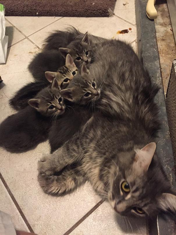 Proud-Cat-Mommies-20