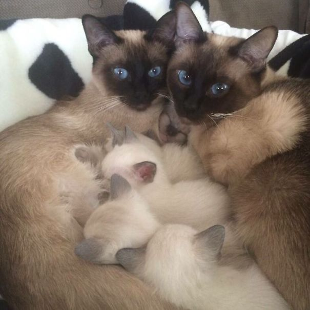 Proud-Cat-Mommies-22