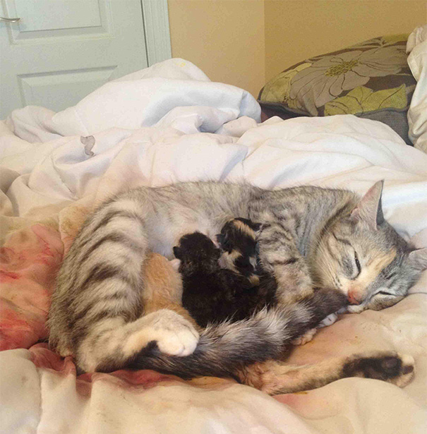 Proud-Cat-Mommies-24
