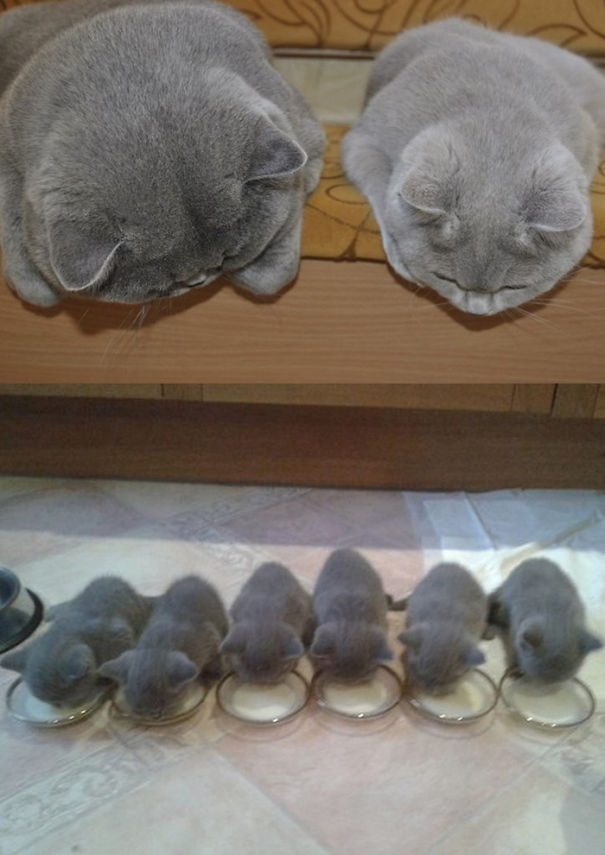 Proud-Cat-Mommies-3