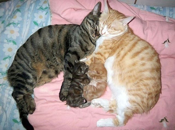 Proud-Cat-Mommies-4
