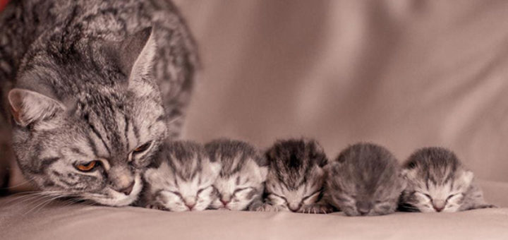 Proud-Cat-Mommies-7