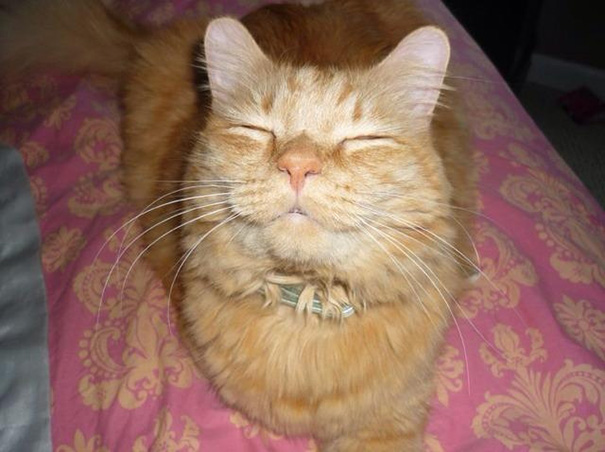 Smiling-Cats-16