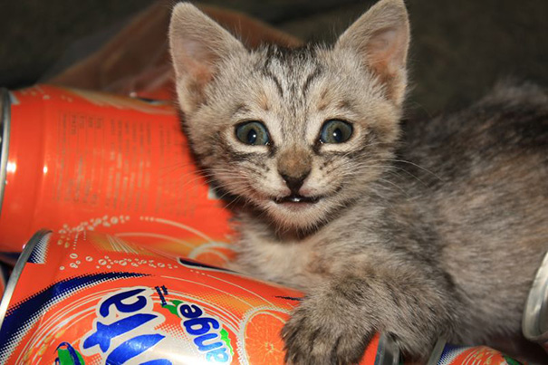 Smiling-Cats-17