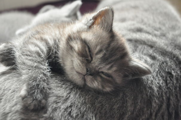 Smiling-Cats-18