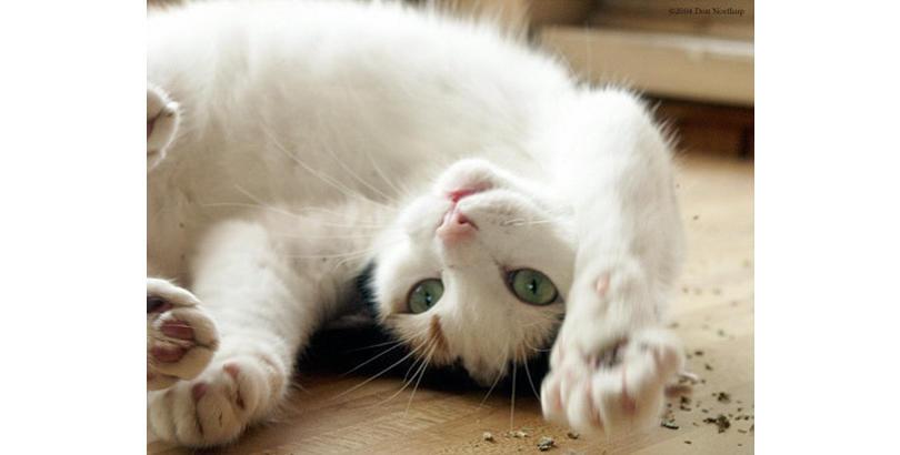 bonkers-cat-nip-25