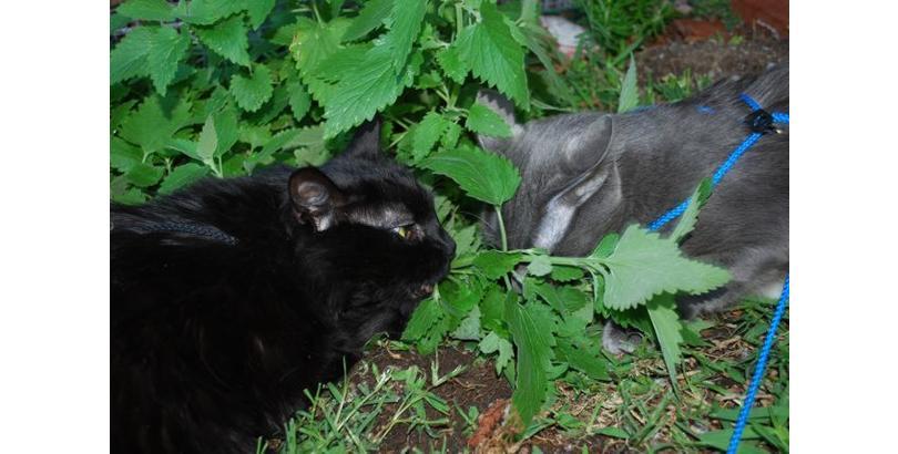 bonkers-cat-nip-28