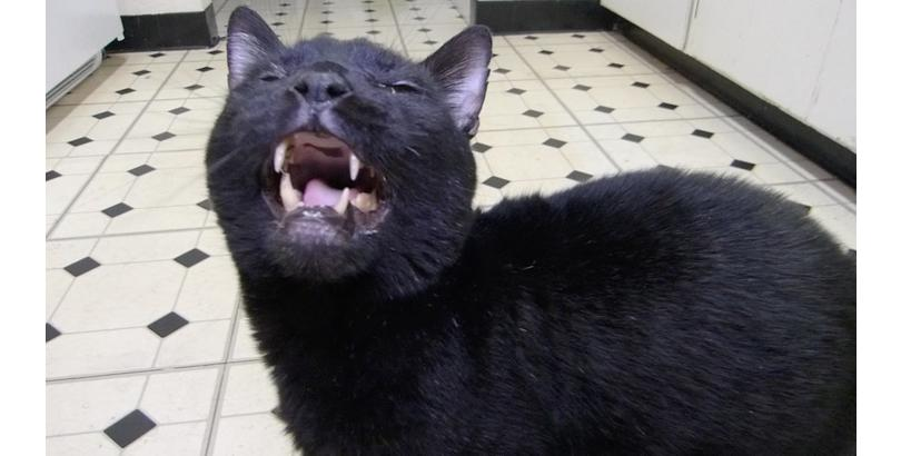 bonkers-cat-nip-32