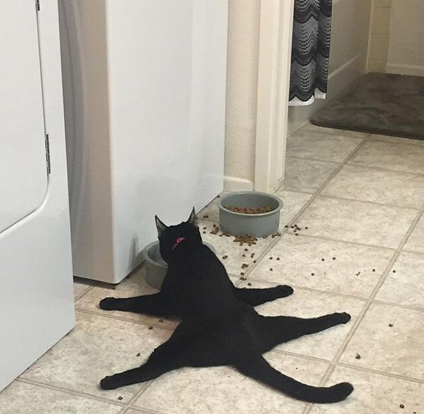 cat-logic-01
